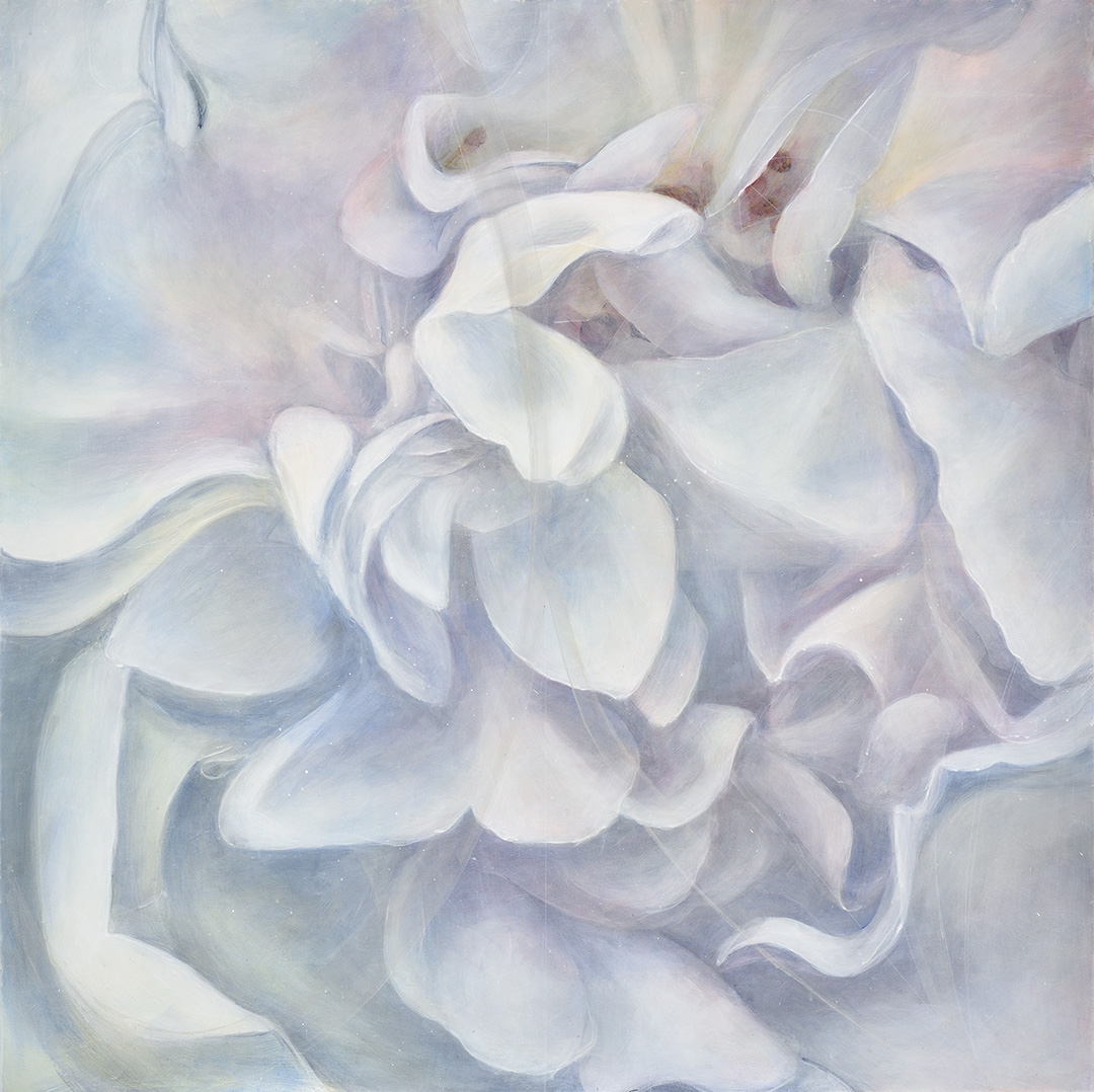 Great White Rose 3